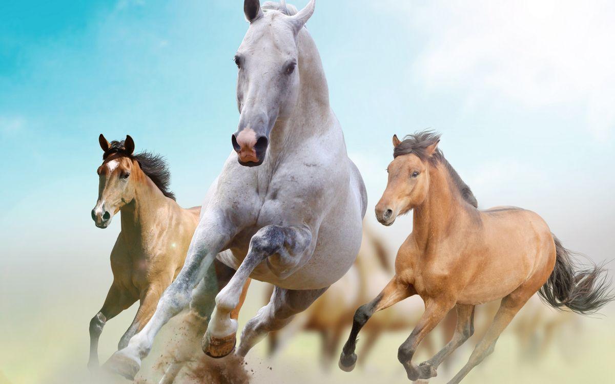Фото бесплатно лошади, кони, гривы, хвосты, бег, пыль, животные
