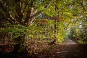 Бесплатные фото осень,лес,дорога,деревья,пейзаж