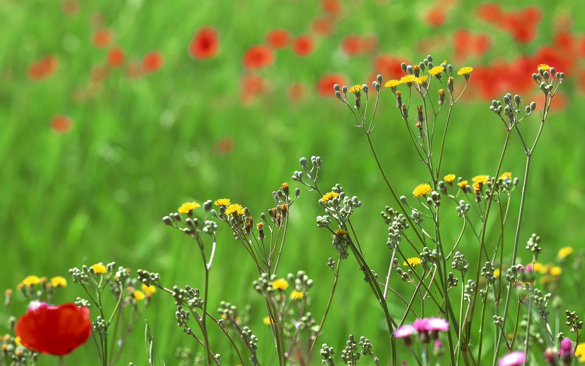 Поляна цветов разные