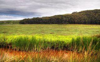 Бесплатные фото трава,поле,холмы,деревья,небо,облака
