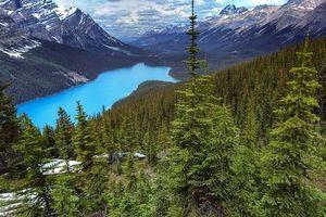 Фото бесплатно Peyto Lake, Banff National Park, Alberta