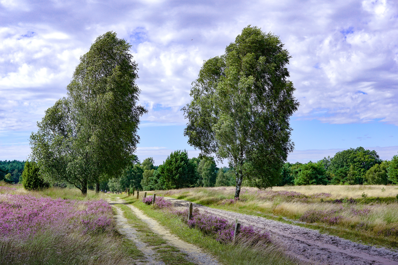 обои поле, дорога, деревья, пейзаж картинки фото