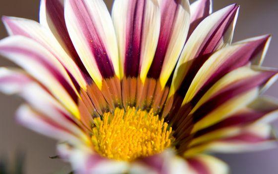 Заставки цветок, лепестки, разноцветные