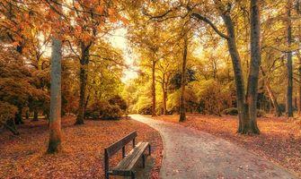 Фото бесплатно Южный Уэльс, Британия, осень, парк, лес, деревья, дорога, лавочка, пейзаж