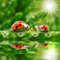 Photo free dew, water, ladybugs