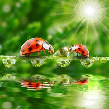 Photo free dew, water, ladybugs