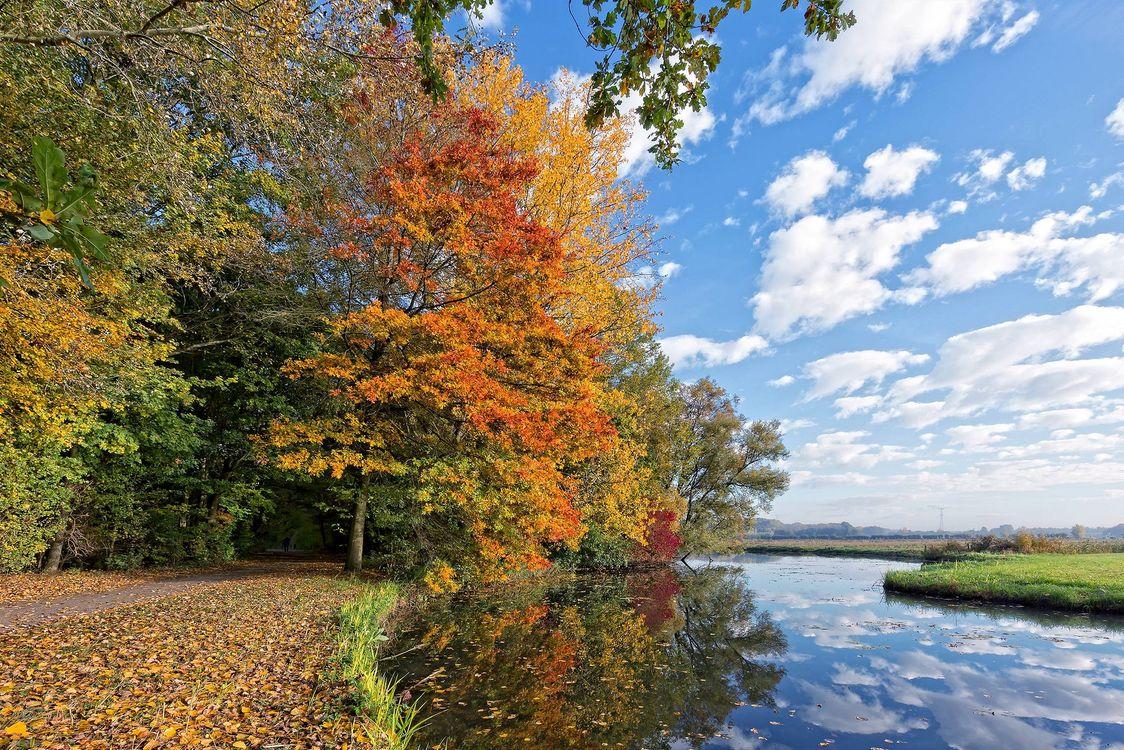 Фото бесплатно парк, осень, дорога, река, деревья, лес, пейзаж, пейзажи