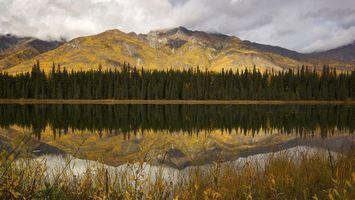 Фото бесплатно лес, ровный, река