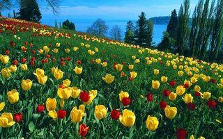 Фото бесплатно гора, поляна, тюльпаны, трава, деревья, море