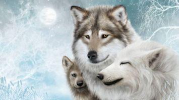 Фото бесплатно хищники, волки, art