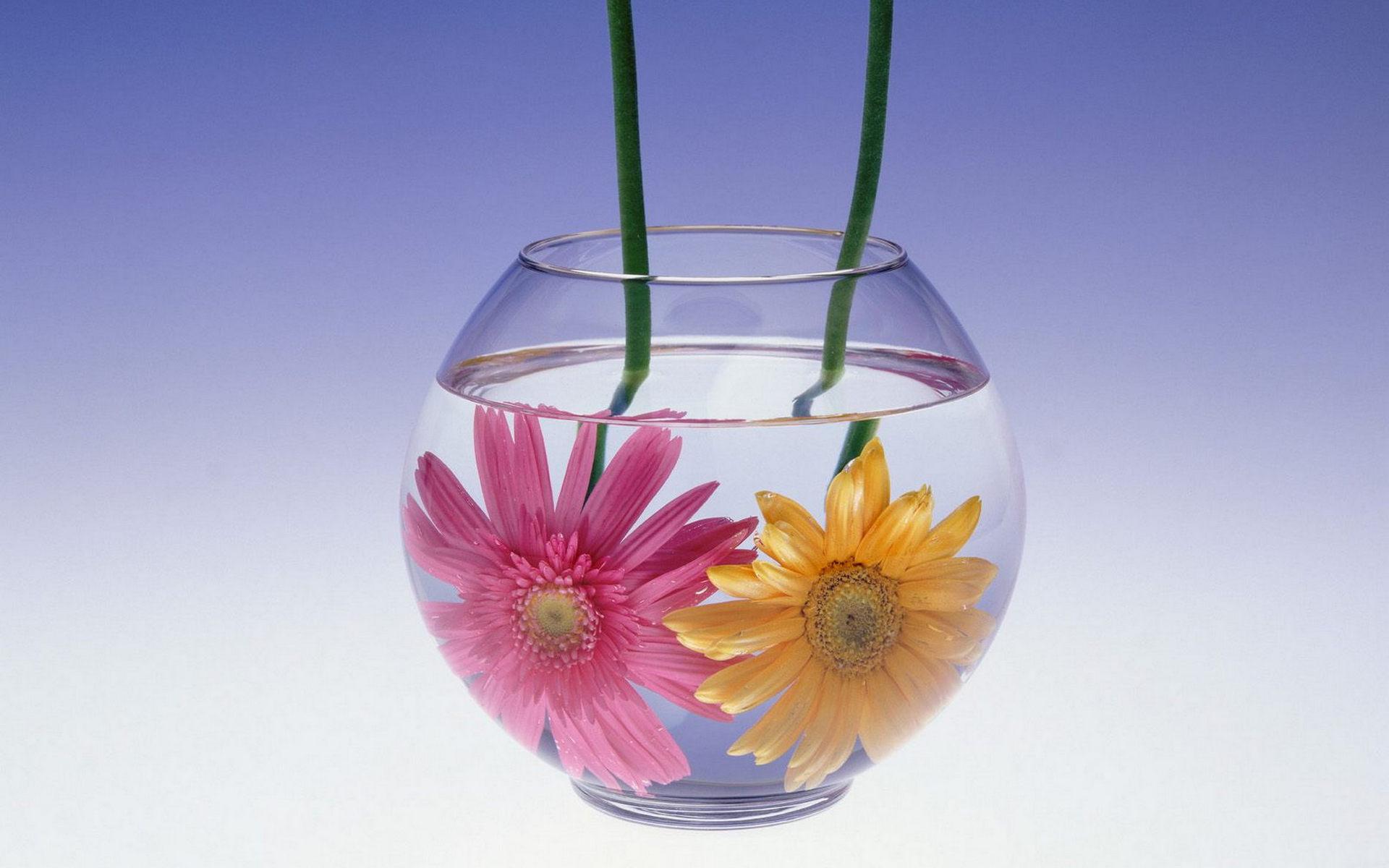 Обои для рабочего стола круглая ваза