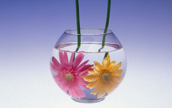 Фото бесплатно аквариум, вода, цветы