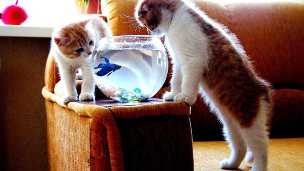 Бесплатные фото друзья наши меньшие,животные,коты,рыбки