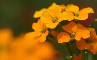 Бесплатные фото цветы, лепестки, оранжевые, пестики, тычинки, стебли