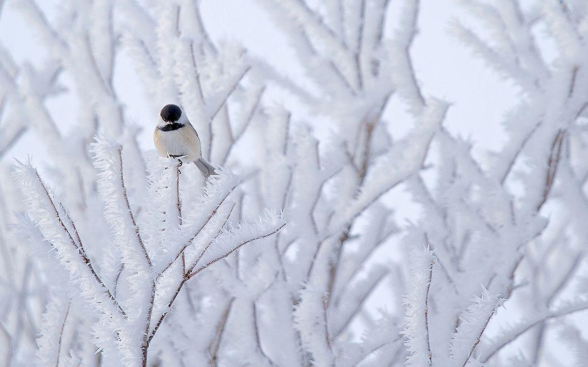 Free photo winter, bird, beak - to desktop