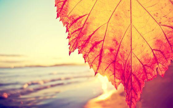 Заставки осенний день, лист, берег, моря, природа