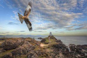 Бесплатные фото остров Лландуйн,Великобритания,Англси