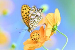 Бесплатные фото бабочка,цветок,макро