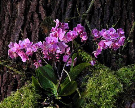 Бесплатные фото натюрморт,дерево,кора,орхидея,цветок,мох,флора
