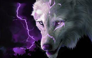 Фото бесплатно волк, взгляд, молния