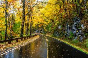 Бесплатные фото Грейт-Смоки-Национальный парк,Теннесси,осень,дорога,мокрый асфальт,лес,деревья