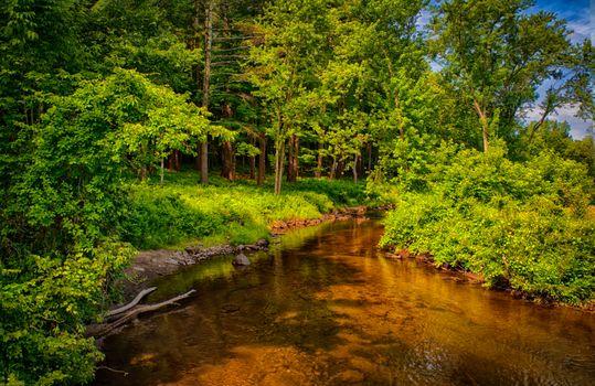 Бесплатные фото лес,деревья,речка,природа