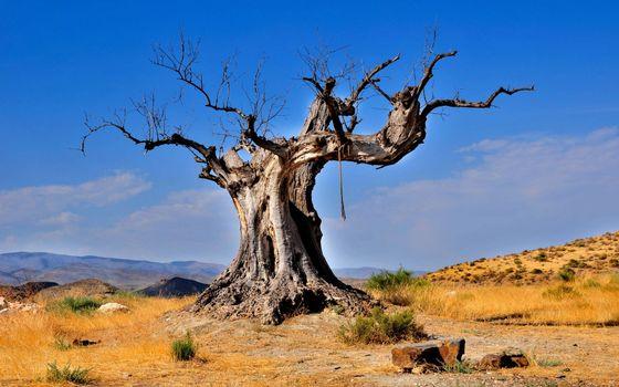 Photo free valley, dry tree, grass