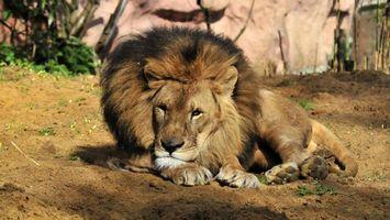 Фото бесплатно лев, морда, грива