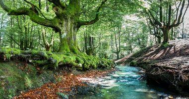 Фото бесплатно деревья, речка, Бискайя