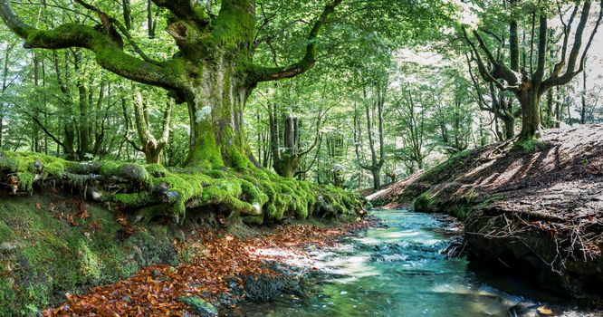 Photo free trees, small river, Bizkaia