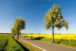 Заставки поле, дорога, деревья