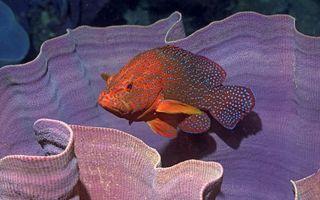 Фото бесплатно рыба, плавники, хвост, окрас, цветная, пятна