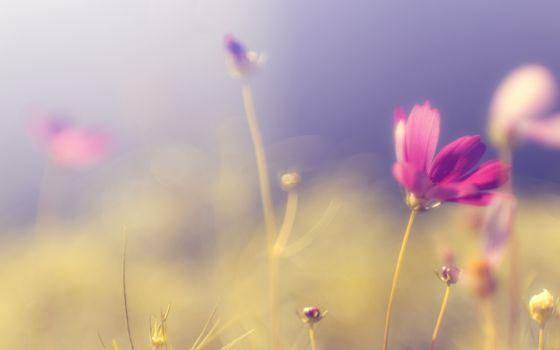 Фото бесплатно цветы, ветер, поляна