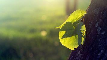 Бесплатные фото дерево,ствол,кора,листья,зеленые,прожилки