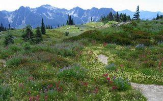 Photo free mountains, grass, flowers