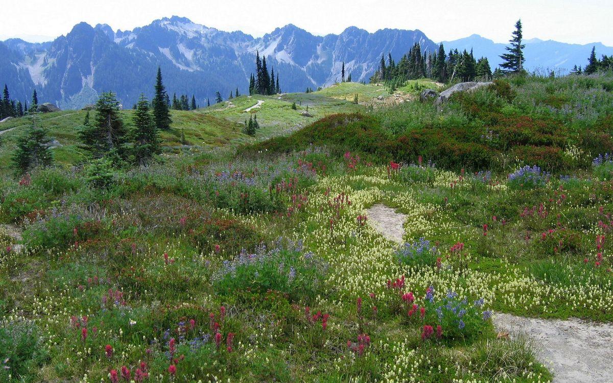 Фото бесплатно горы, трава, цветы - на рабочий стол