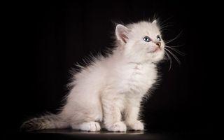 Бесплатные фото котенок,морда,лапы,хвост,шерсть,фон черный