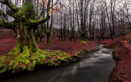 Фото бесплатно природа, Страна Басков, Лес
