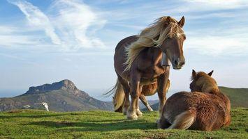 Фото бесплатно лошадь, ботало, жеребята