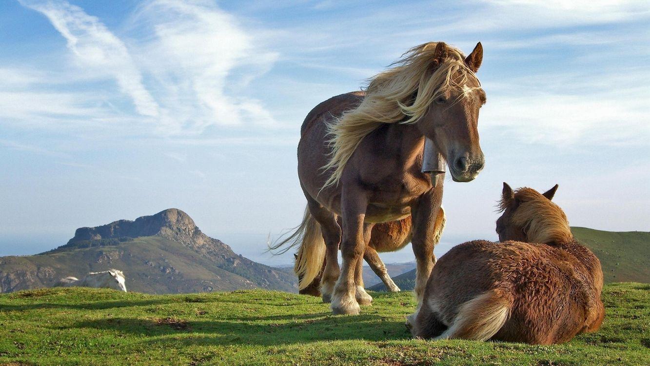 Фото бесплатно лошадь, ботало, жеребята - на рабочий стол