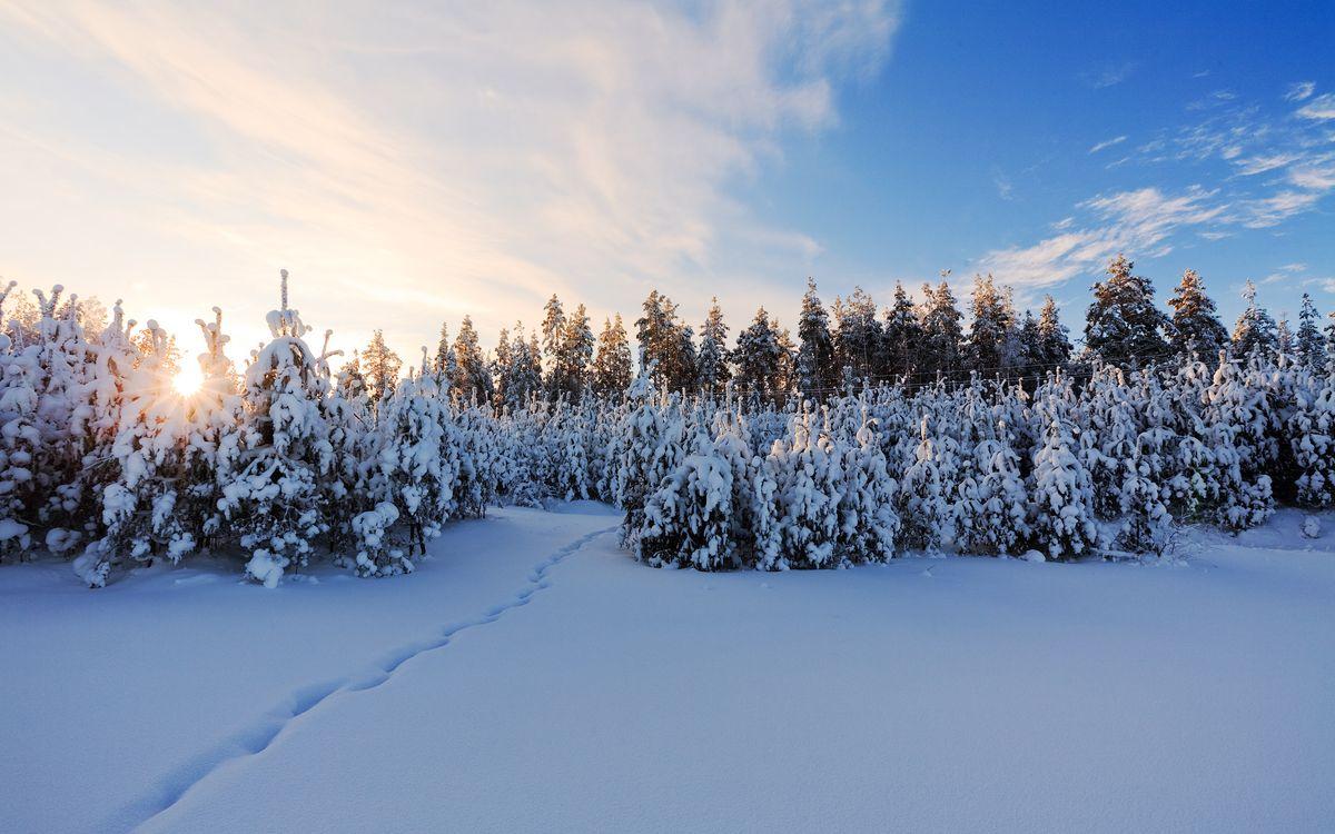 Фото бесплатно зима, снег, сугробы, деревья, елки, небо, солнце, природа