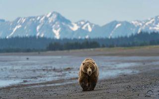 Бесплатные фото медведь,бурый,берег,река,тайга,горы