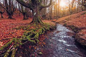 Фото бесплатно Otzarreta, осень, лес
