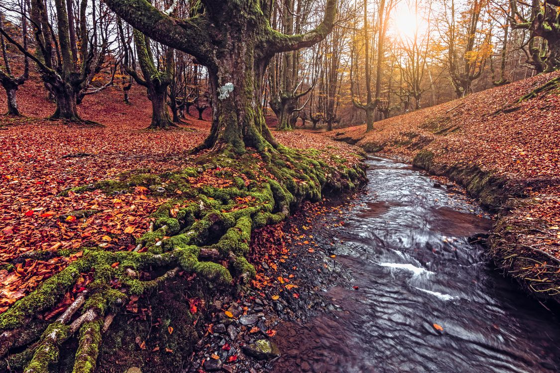 Фото бесплатно Otzarreta, Bizkaia, Spain, лес, деревья, речка, пейзаж, осень, пейзажи