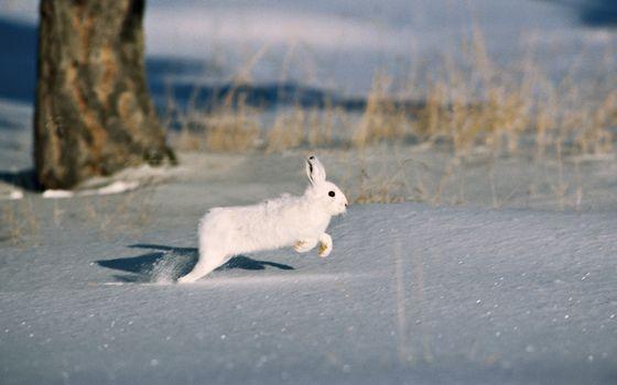 Photo free winter, snow, hare