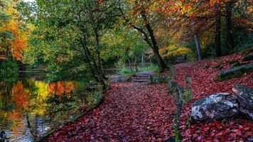 Бесплатные фото осень,парк,деревья,пейзаж