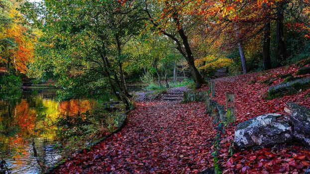 Фото бесплатно осень, парк, деревья