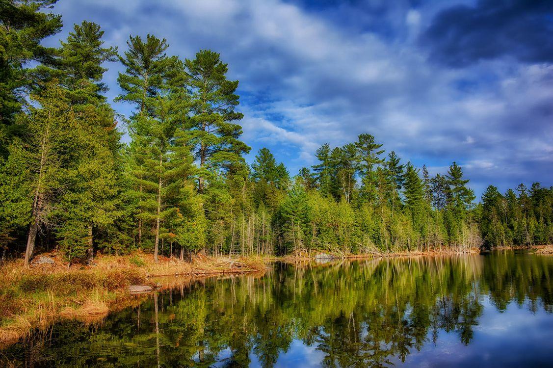 Лес и рядом озеро картинки