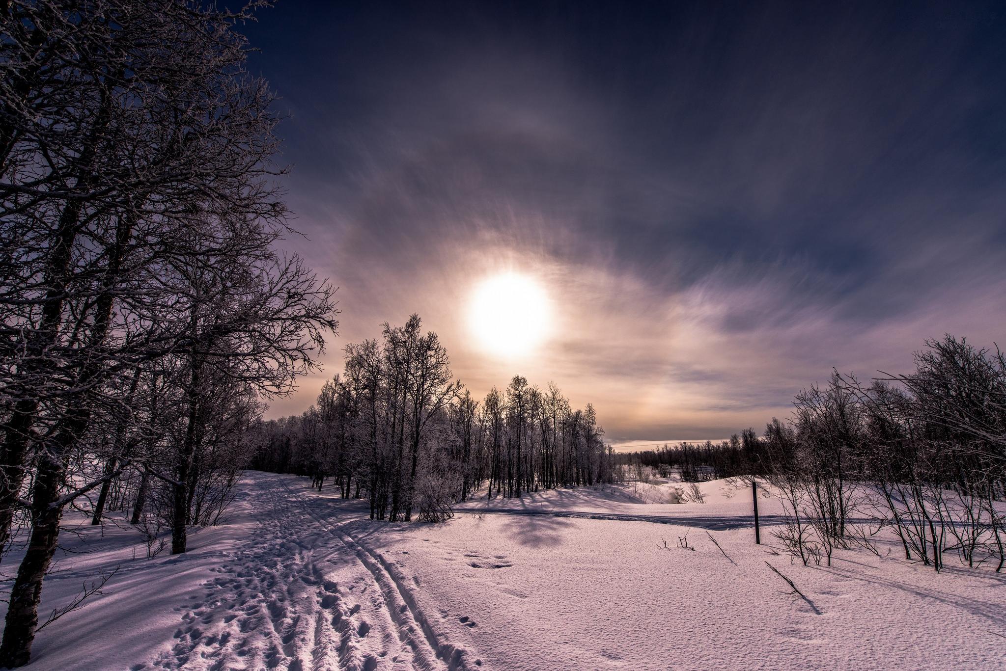 обои закат, снег, деревья, пейзаж картинки фото