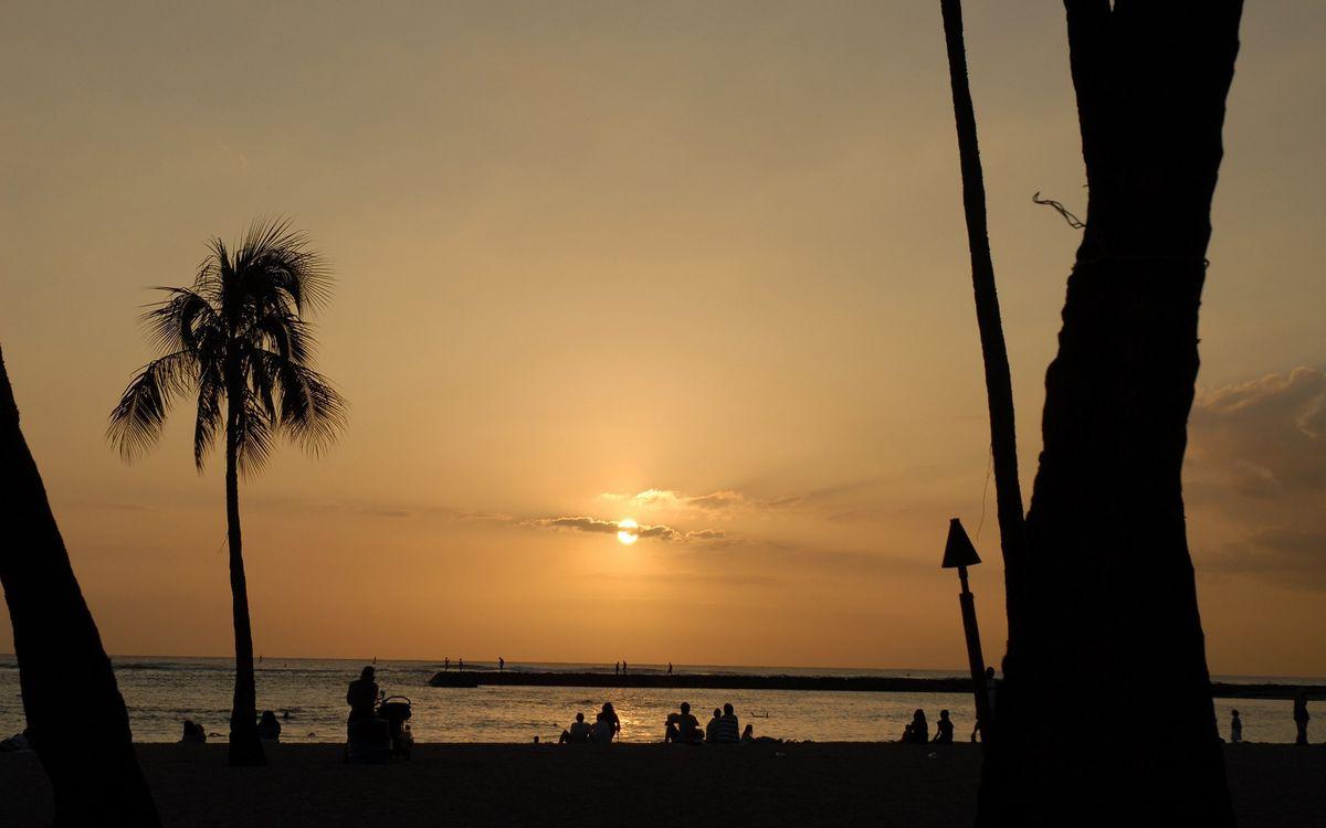 Фото бесплатно вечер, побережье, пальмы, люди, море, горизонт, небо, солнце, закат, пейзажи